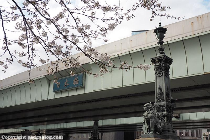 日本橋と桜