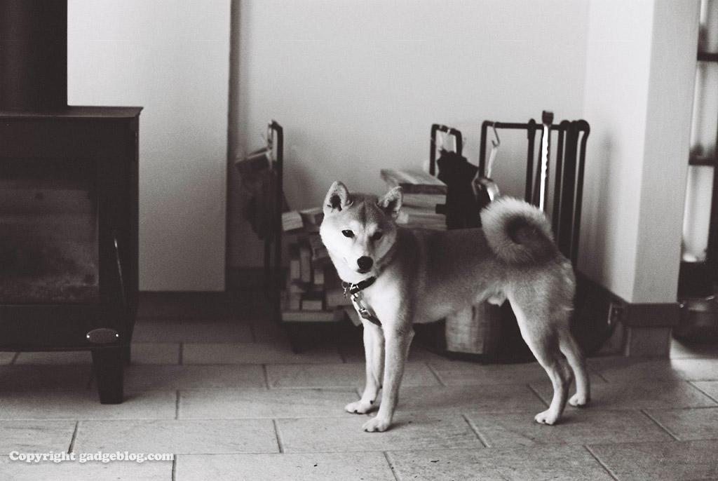 平成最後に撮影したのにまるで昭和の犬?