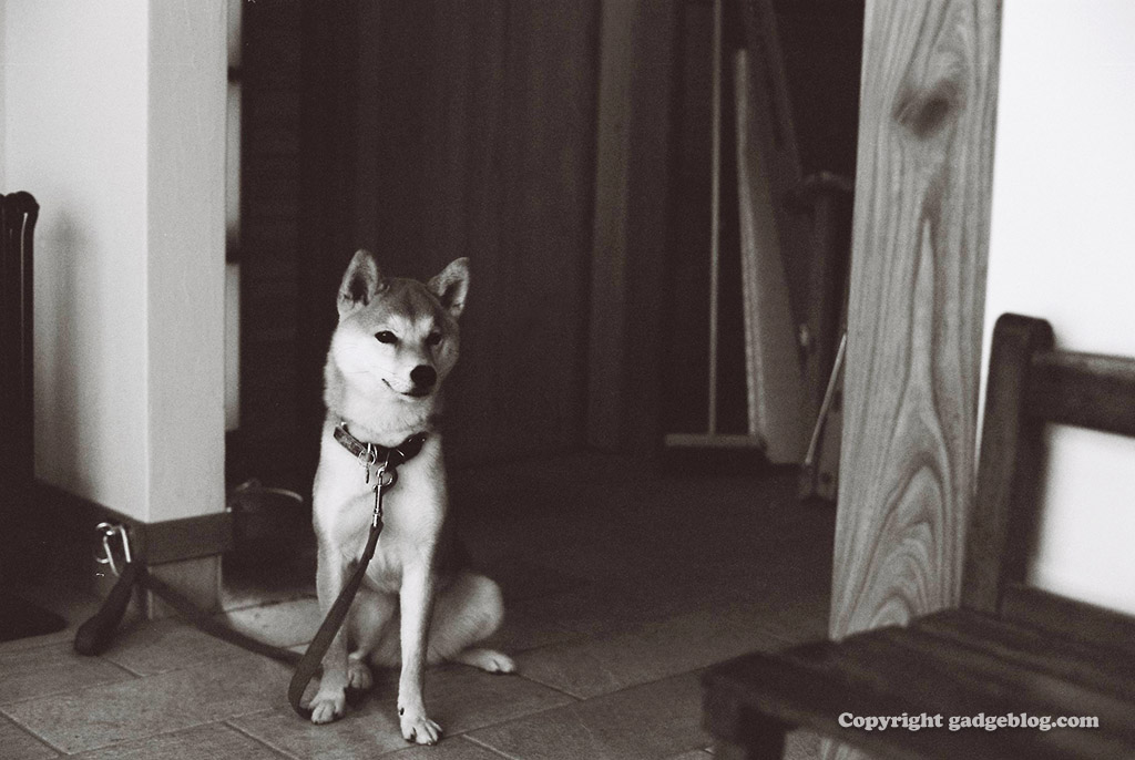 平成最後に撮影したのにまるで昭和の犬?パート2