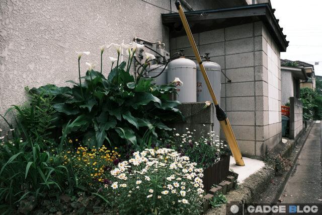 観葉植物とガスボンベ