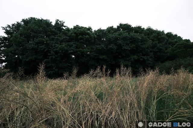枯れ草と樹木