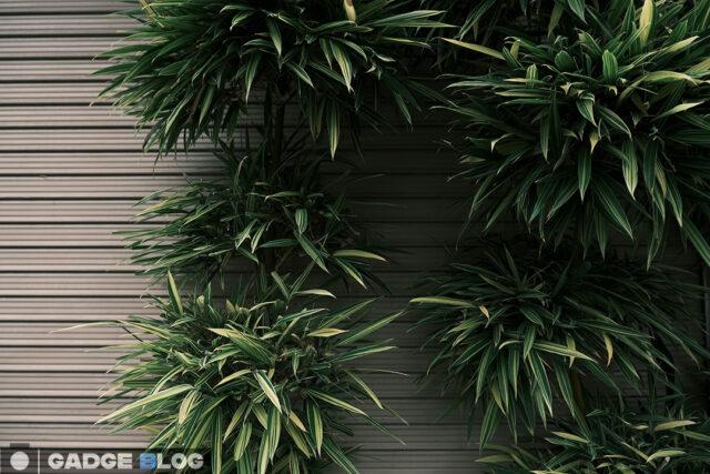シャッターを覆う観葉植物