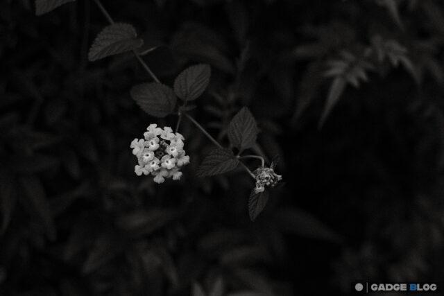 小さく咲く